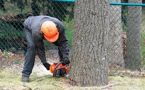Denver Heights Tree Service